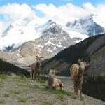 Reisverslag West-Canada